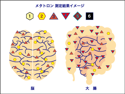 メタトロン測定結果イメージ