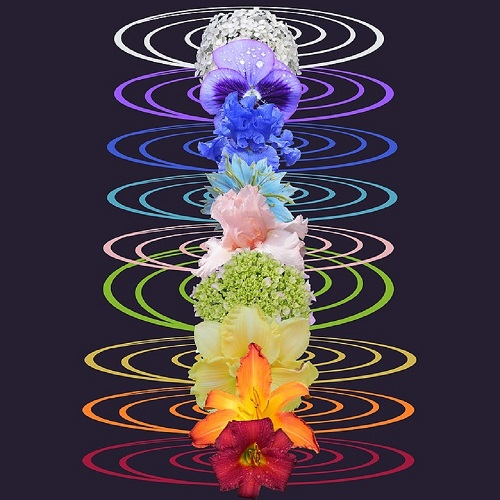 花セラピーチャクラ